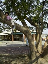 banpaku_tree.jpg
